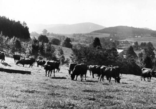 1956-1961